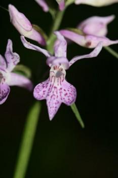 Flore des Abruzzes