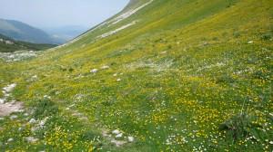 Monti della Meta dans les Abruzzes